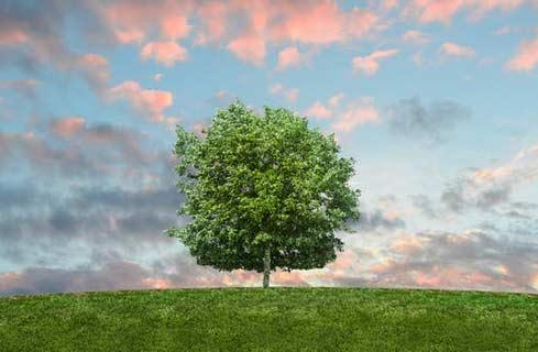 Optimisation des tournées commerciales et empreinte carbone